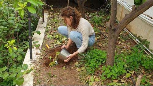 in-soil composting